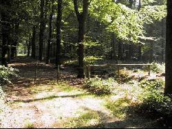De bossen van Beetsterzwaag