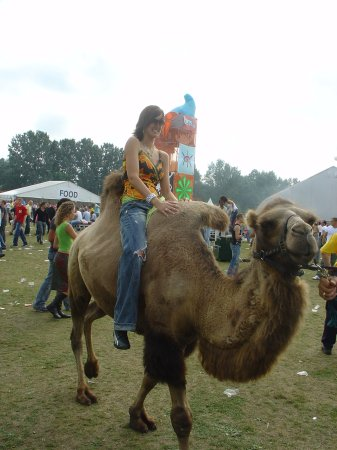 Huh? een kameel??